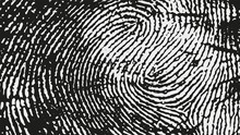 Original Fingerprint Pattern. ...