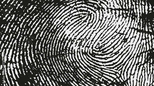 Fotografía  Original fingerprint pattern. Black stripes on white background.