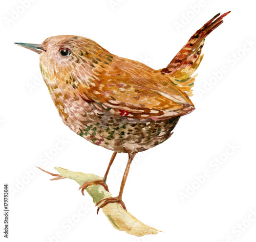 Wren bird illustration watercolor Fototapet