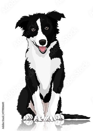 Photo Dog vector drawing