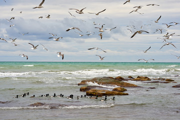 Obraz na SzkleBirds of the sea. Seabirds are birds that are adapted to life within the marine environment.