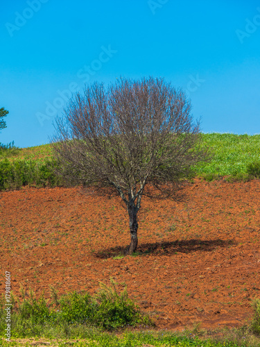 Foto op Aluminium Blauw The landscape scenery of agriculture crop feild with the dry standing tree at the countryside of Pindaya, Shan state, Myanmar