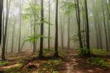 mgła w lesie