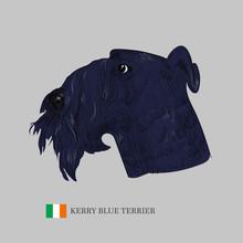 Kerry Blue Terrier Dog Portrai...