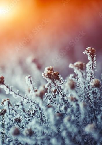 motyw-mrozonych-kwiatow