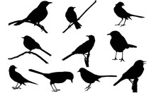 Mocking Bird Silhouette Vector...