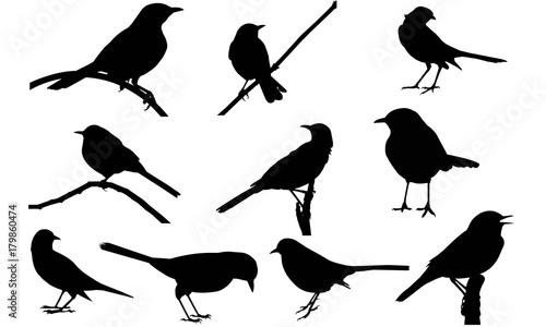 Photo Mocking Bird Silhouette Vector Graphics