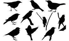 Nightingale Silhouette Vector Graphics