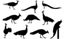 Peafowl Silhouette Vector Grap...
