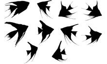 Angel Fish Silhouette Vector G...