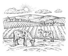 Rural Landscape With Cows. Vec...