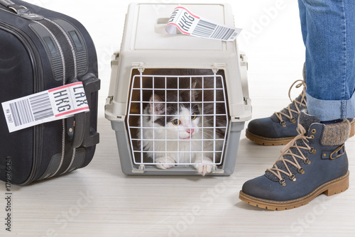 Fotografering  Cat in the airline cargo pet carrier
