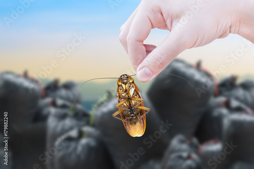 Woman's Hand holding cockroach on black bag (garbage bag)  of rubbish background, eliminate cockroach in apartment and house