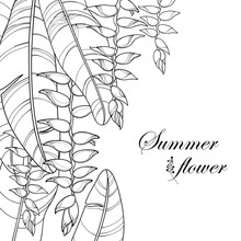 Vector Bunch With Outline Heliconia Rostrata Or Lobster Claws Flower And Leaf In Black Isolated On White Background. Ornate Tropical Flowers In Contour Style For Summer Design And Coloring Book.