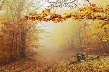 Panel Szklany Optyczne powiększenie Path in the autumn golden forest