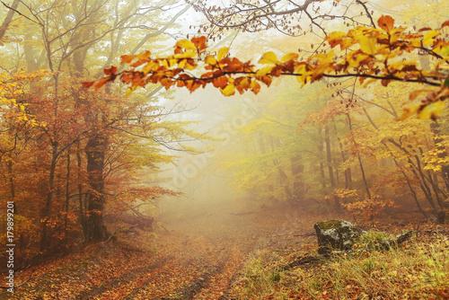 Aluminium Prints Autumn Path in the autumn golden forest