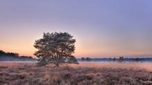 Tree At Autumn Sunset At Heath...