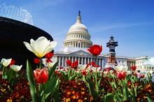 Capitol Spring