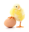 Two chickens and egg