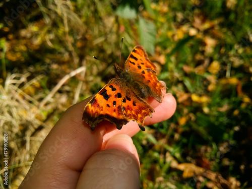 Plakat przecinek motylkowy 1