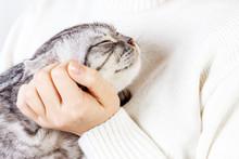 Happy Kitten Likes Being Strok...