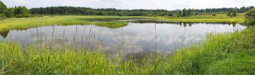 Fototapety, obrazy: Panoramic view of a pond with green banks, overgrown with reeds and other near-water plants. A shallow lake in summer day