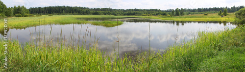 Lac / Etang Panoramic view of a pond with green banks, overgrown with reeds and other near-water plants. A shallow lake in summer day