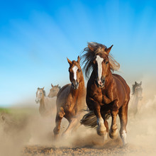 Two Wild Chestnut Horses Runni...