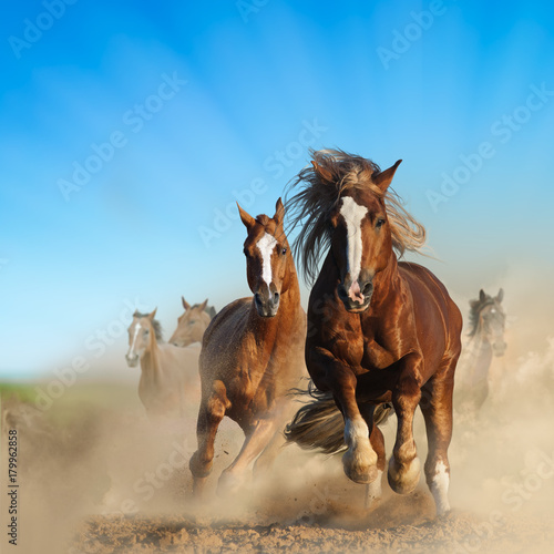 Photo  Two wild chestnut horses running together in dust, front view