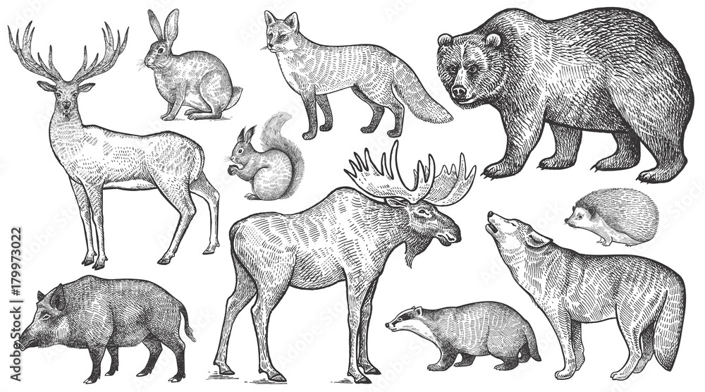 Fototapeta Forest animals big set.