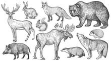 Forest Animals Big Set.