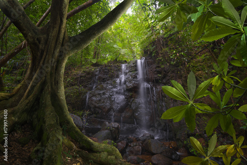 Tuinposter Jungle Asian jungle