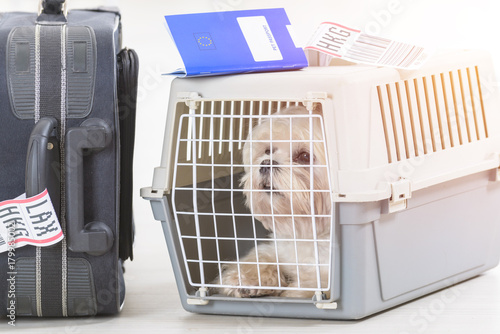 Fotografering little dog in the airline cargo pet carrier