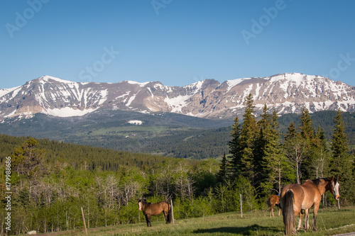 Fotografia, Obraz  Glacier National Park landscape with horses