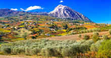 Colorful Fields Of Vineayrds And Olives Trees In Benevento Province, Italy