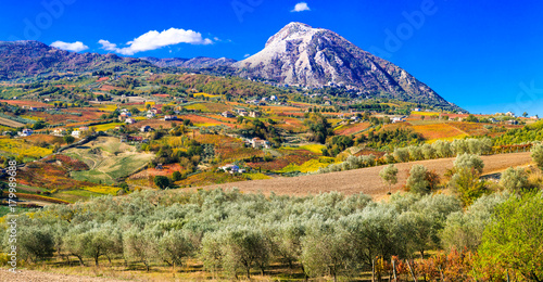 Colorful fields of vineayrds and olives trees in Benevento province, Italy Wallpaper Mural