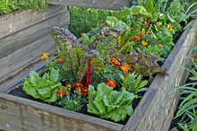 A Raised Bed Of Vegetables And...