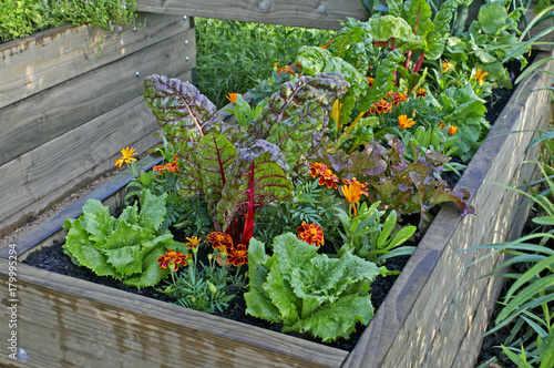 Poster Jardin A raised bed of vegetables and flowers in a urban garden
