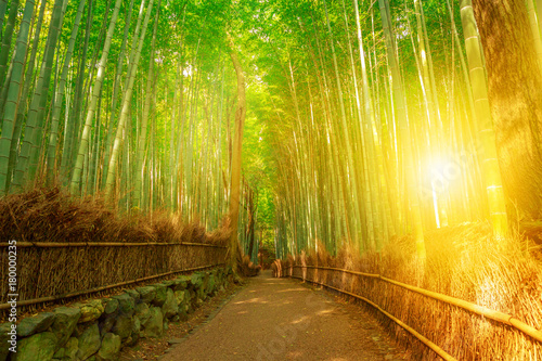 Foto op Plexiglas Bamboe Bamboo grove at Sagano in Arashiyama in surreal sunlit. The forest is Kyoto's second most popular tourist destination and among the 100 phonetic stations in Japan. Meditative listening concept.