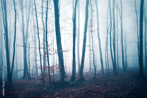 fantazja-zmrok-blekitny-czerwien-barwil-mglowego-lasowego-drzewa-krajobraz