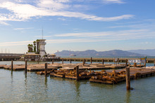 Sea Lions At Pier 39 In San Fr...