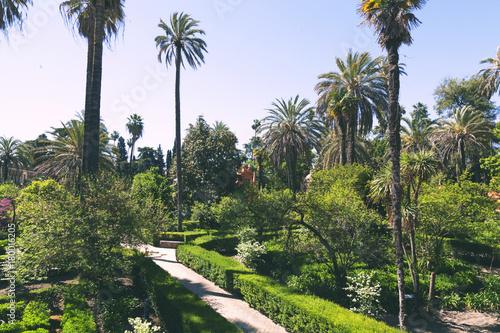 Jardines del real Alcazar de Sevilla Poster