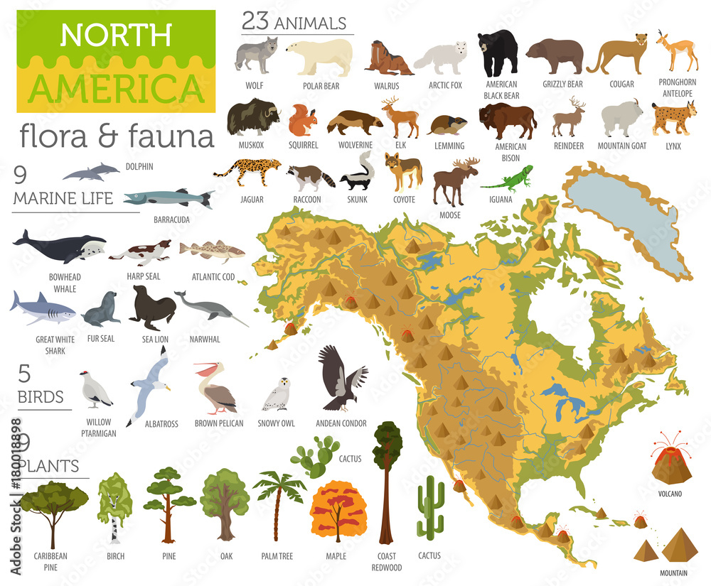 Fototapeta North America flora and fauna map, flat elements. Animals, birds and sea life big set. Build your geography infographics collection