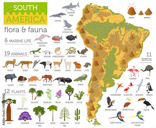 Cuadros en Lienzo  South America flora and fauna map, flat elements