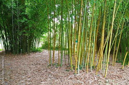 In de dag Bamboo Strasbourg, France - july 24 2016 : university botanical garden