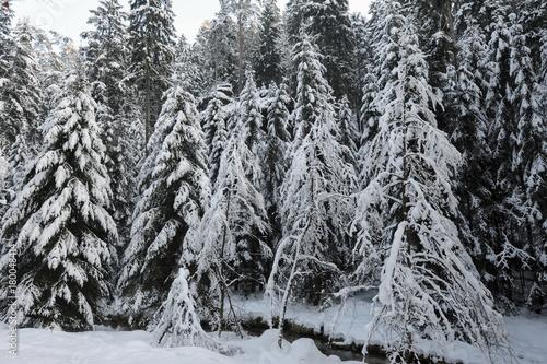 Aluminium Prints Dark grey Winter landscape of Bohemian Switzerland