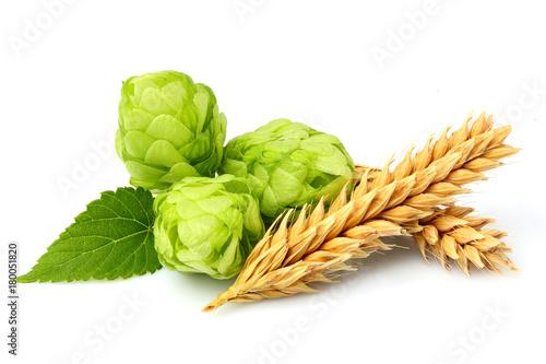Green hops, ears of barley and wheat grain.