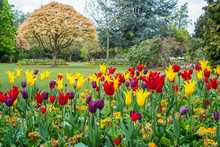 Colorful Tulips Seen At Cannon Hill Park In Birmingham During Spring