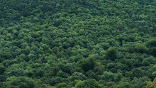 Forest Vegetation Texture, Green Trees View From Above