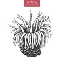 Hand Drawn Actinia - Sea Flowe...